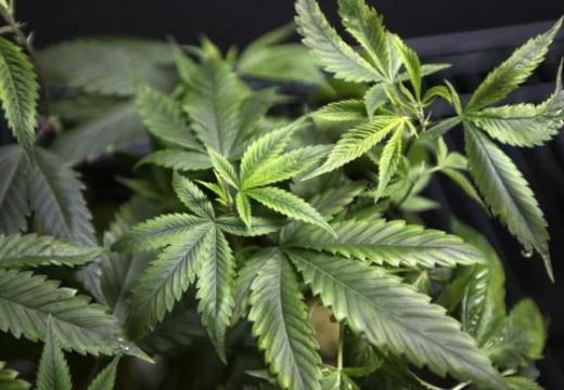 Medical Marijuana Showing Progress In Treating Seizures