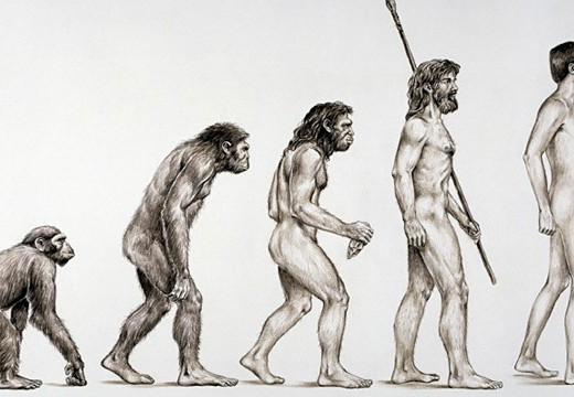 Basics Of Evolution Theory
