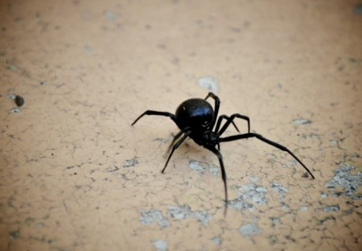 Arachnophobe Nightmare: 5 Spiders That Have Been In The UK News Recently