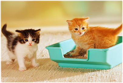 How To Resolve Your Cat Litter Box Issues