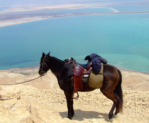 What You Need To Know About The Fascinating History and Heritage Of The Arabian Horse