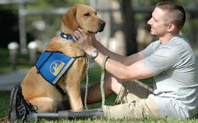 Service dog trainings, Service dogs pay visits to hospitals,Animal Training