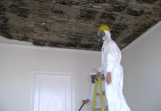 Why Professional Mold Removal is an Important Part of the Hotel Industry