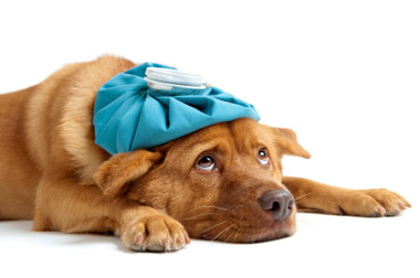6 Ways To Tell Your Pet Is Sick