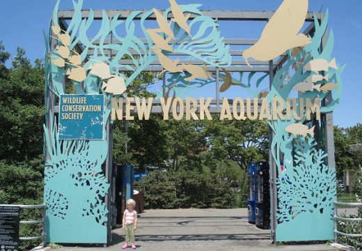 Popular Aquariums In And Around NYC